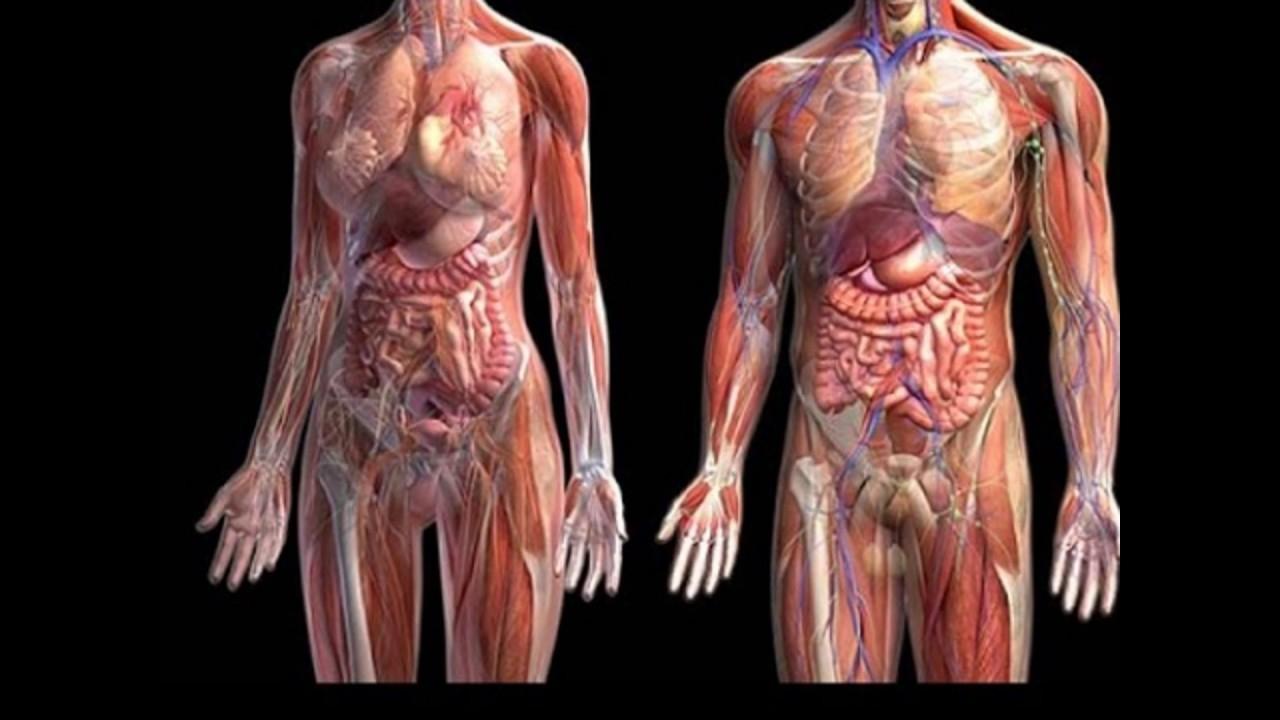 Los siete órganos que no necesitás para sobrevivir - Infofueguina ...
