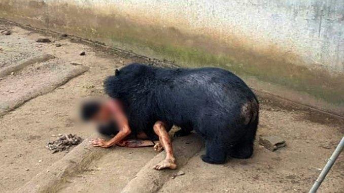 Un oso ataca a un hombre tras ser provocado — Fuertes imágenes