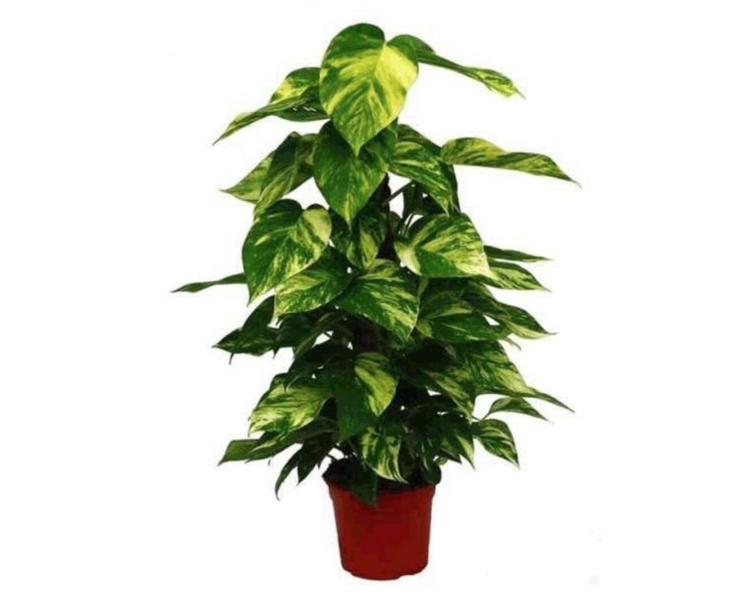 Plantas Que Limpian El Aire Free Las Con Plantas With Plantas Que  ~ Plantas Que Limpian El Ambiente