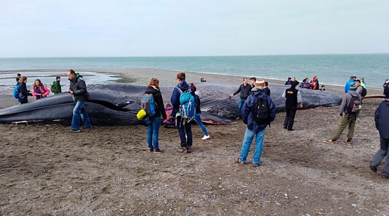 Escribieron mensajes sobre una ballena muerta y se sacaron fotos