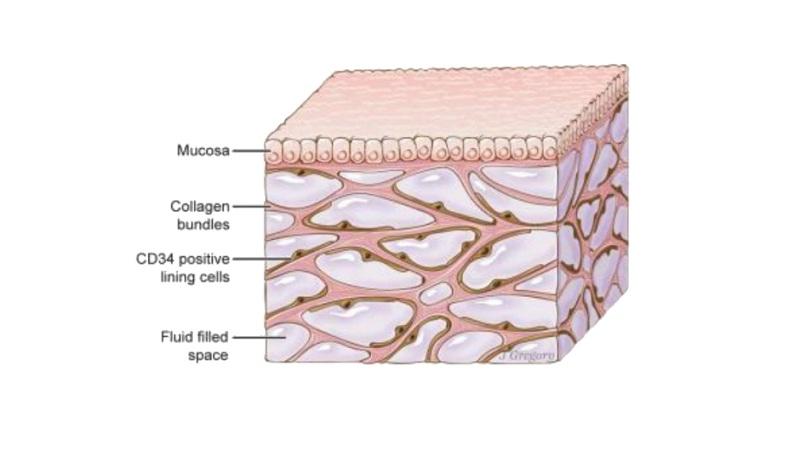 Descubren un nuevo órgano en el cuerpo humano - Infofueguina ...