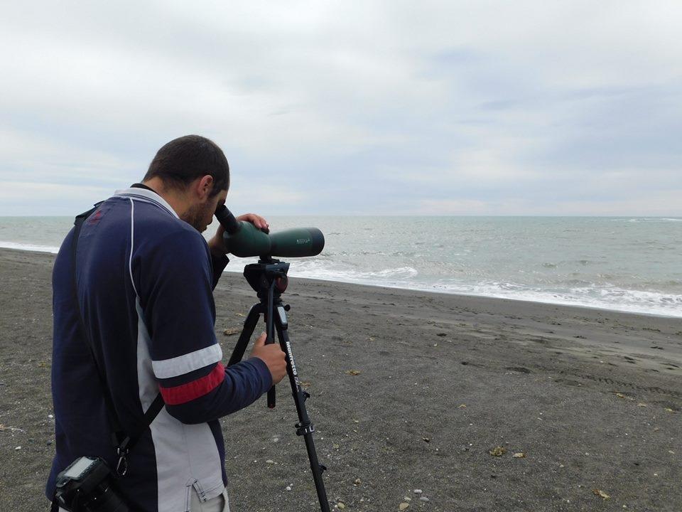 Panamá está lista para el conteo de aves masivo 'Global Big Day'