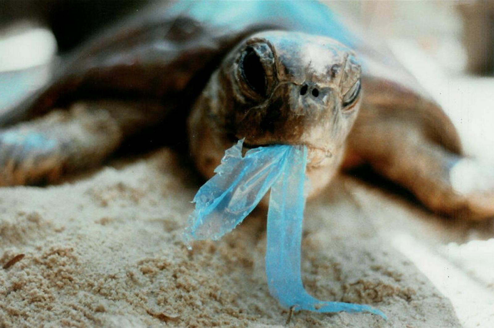Resultado de imagen para tortugas verdes bolsas comida