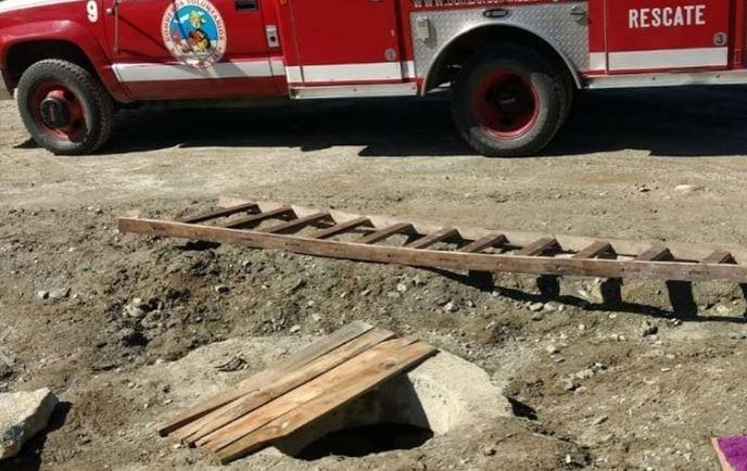 Un perro se cayó en un pozo y murió en Ushuaia - Infofueguina