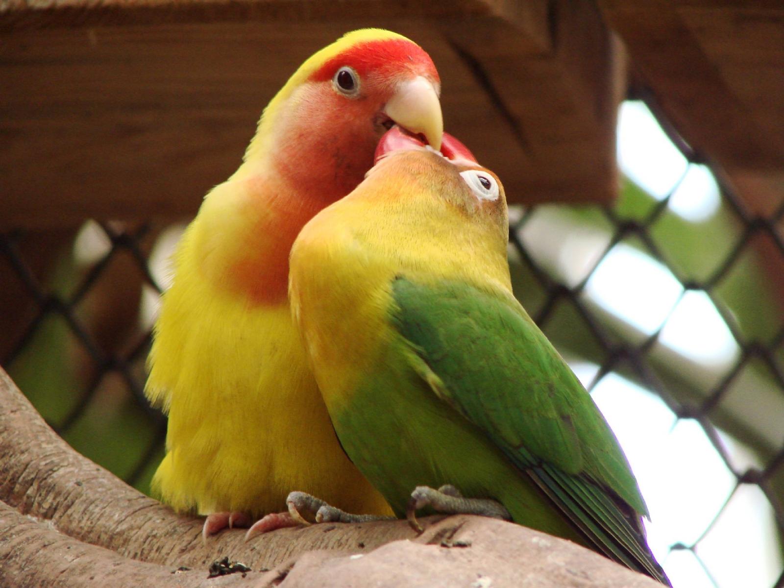 Un pájaro revive a otro que chocó contra un vidrio