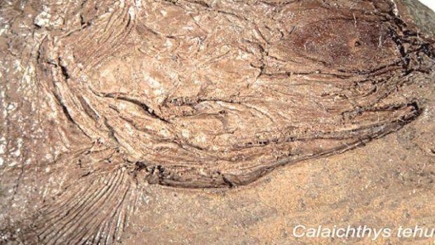 Encontraron un pez de 240 millones de años