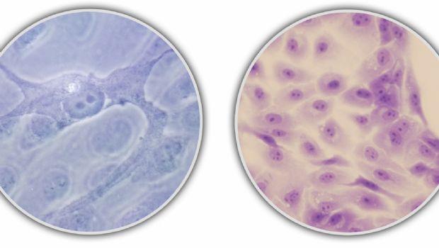 Desarrollan nuevo método para rejuvenecer nuestras células