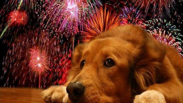 Desarrollan fármaco para el miedo de los perros a fuegos artificiales