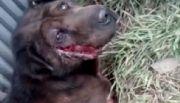 Buscan a una perra atropellada por una camioneta en Ushuaia
