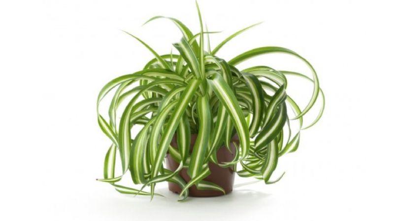 La nasa dio cuenta de plantas que purifican el aire del - Plantas de interior que purifican el aire ...