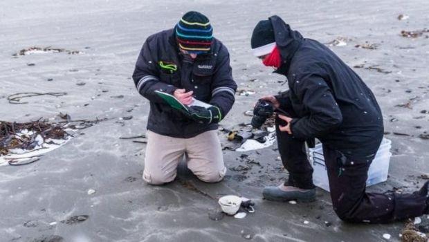 Encuentran restos de un naufragio en Península Mitre