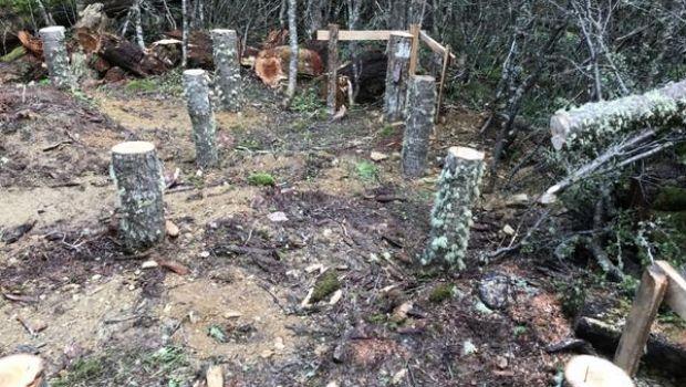 Desarticulan un intento de ocupación ilegal de tierras
