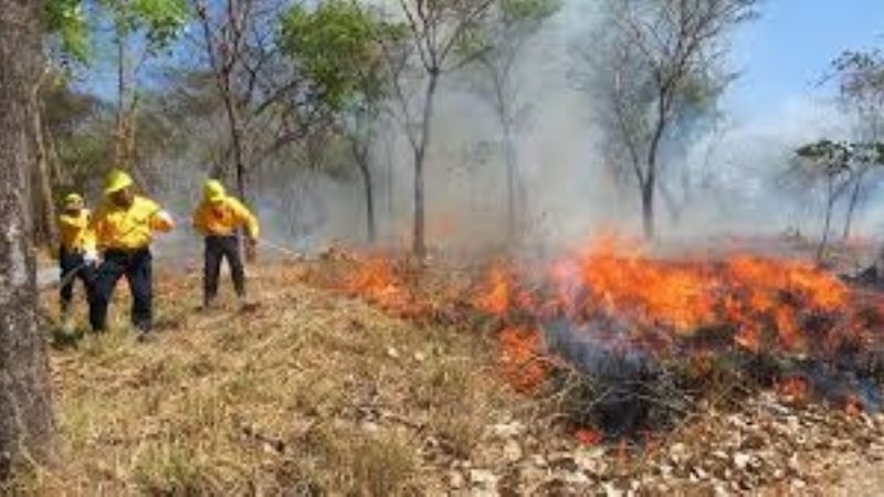Anuncian reunión anual del Comité de Incendios Forestales